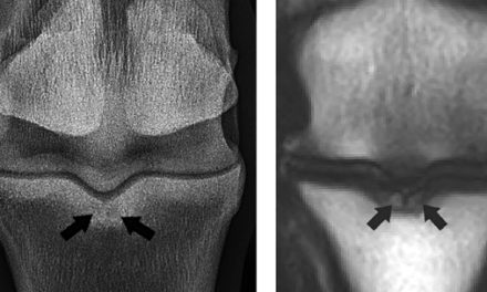 Sagittal Groove Injury Outcomes in Warmblood Horses