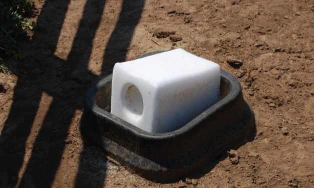 Choosing Salt and Mineral Blocks for Horses