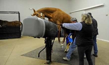 The Vet Tech's Role in Stallion Semen Collection