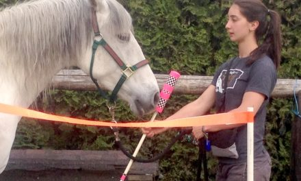 2015 ISES Convention Highlights: How Horses Learn and More