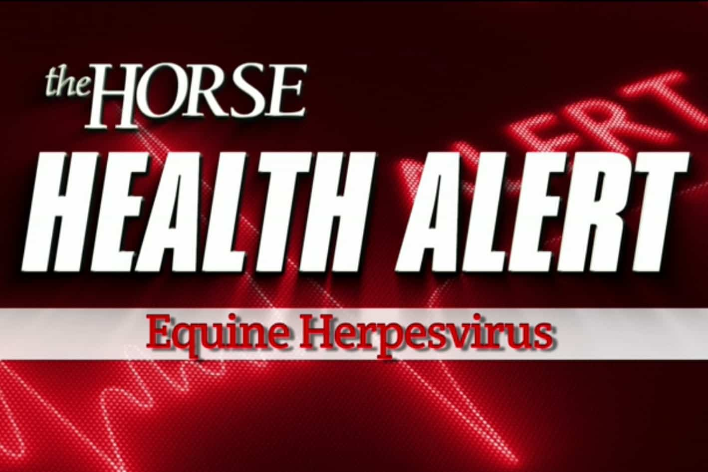 equine herpesvirus