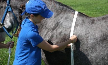 Study: Heavier Horses Are Less Symmetrical, Less Fit