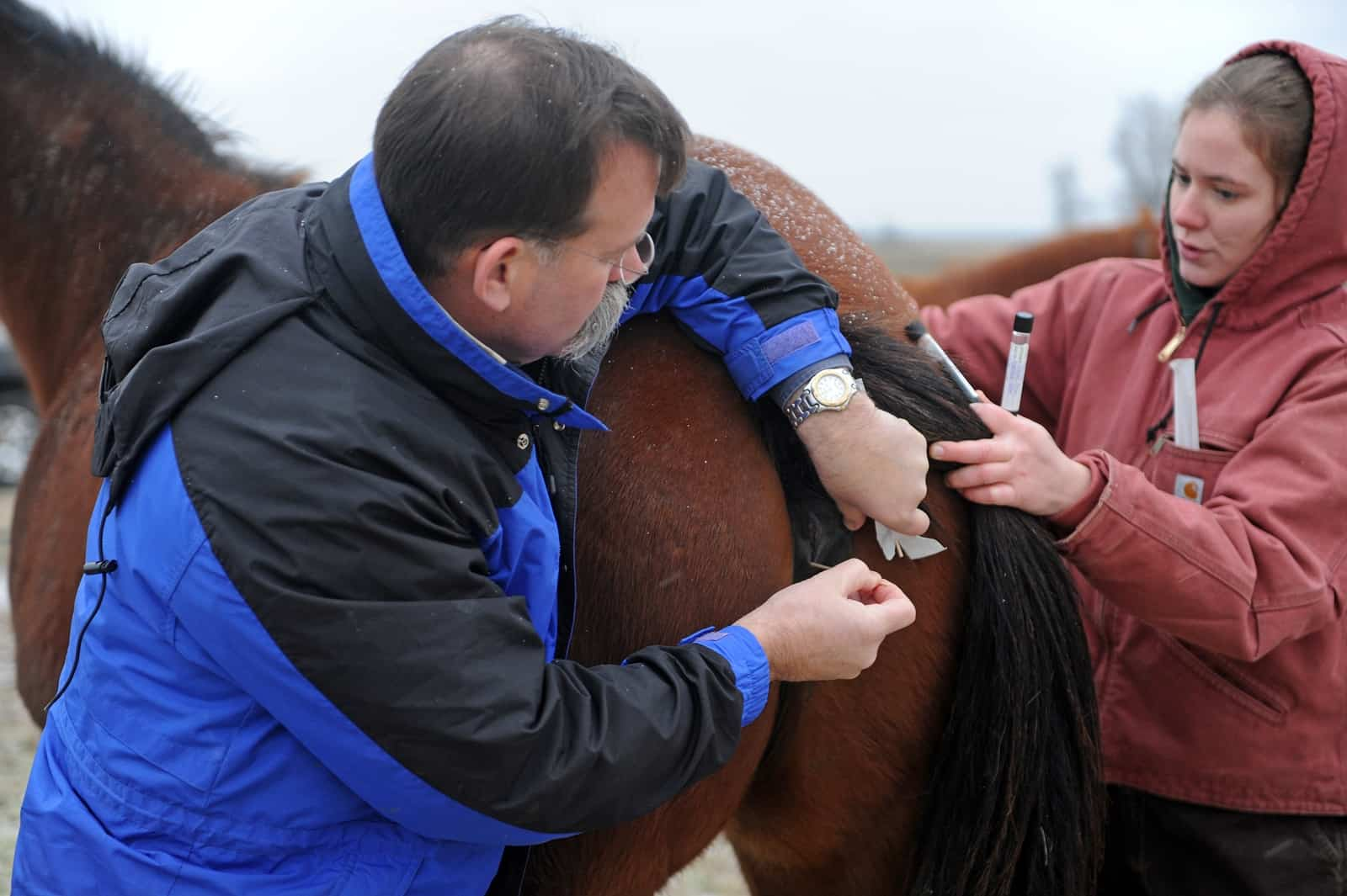 The Vet Techs Role In Ambulatory Broodmare Care The Horse