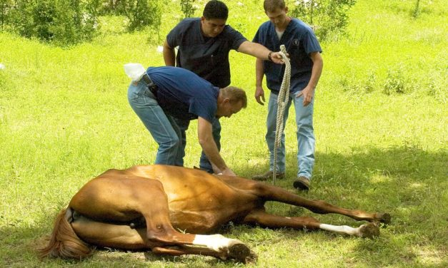 Anesthetizing Horses in the Field for an Hour or More