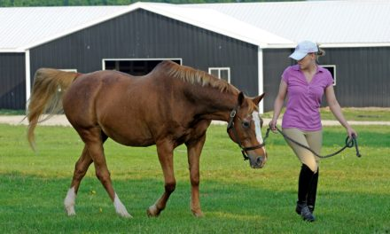 How Well Do Horse Owners Recognize Colic?