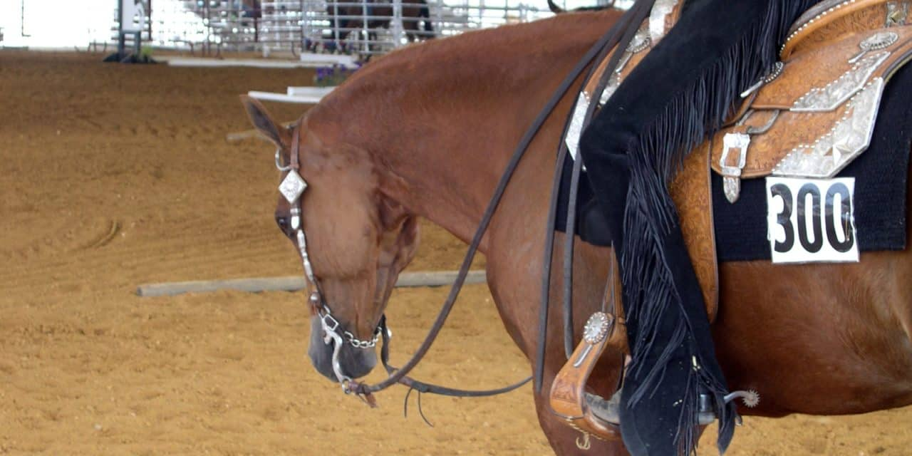 Saddle Sore Spots The Horse