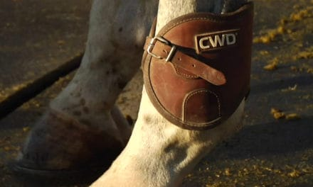 How to Choose Hind Leg Protection for Your Horse