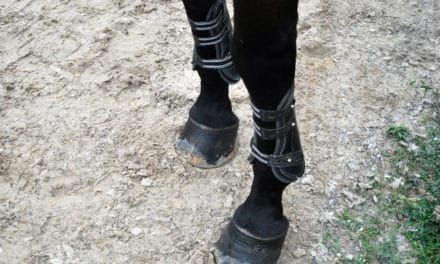 How to Choose Front Leg Protection for Your Horse
