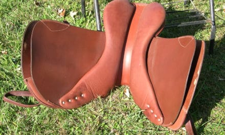 Does Your Saddle Hurt Your Horse?