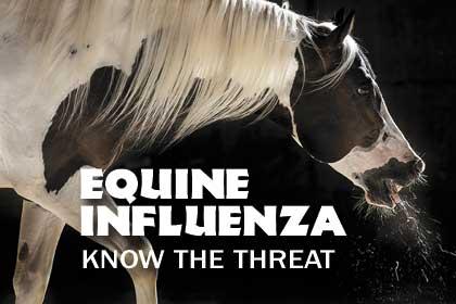 Característica especial: Gripe eqüina: conhecer a ameaça