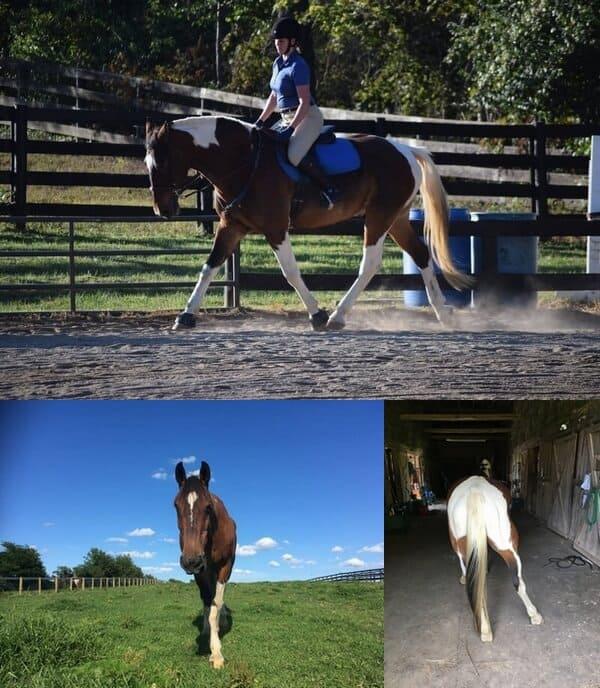 Update: EPM In Horses