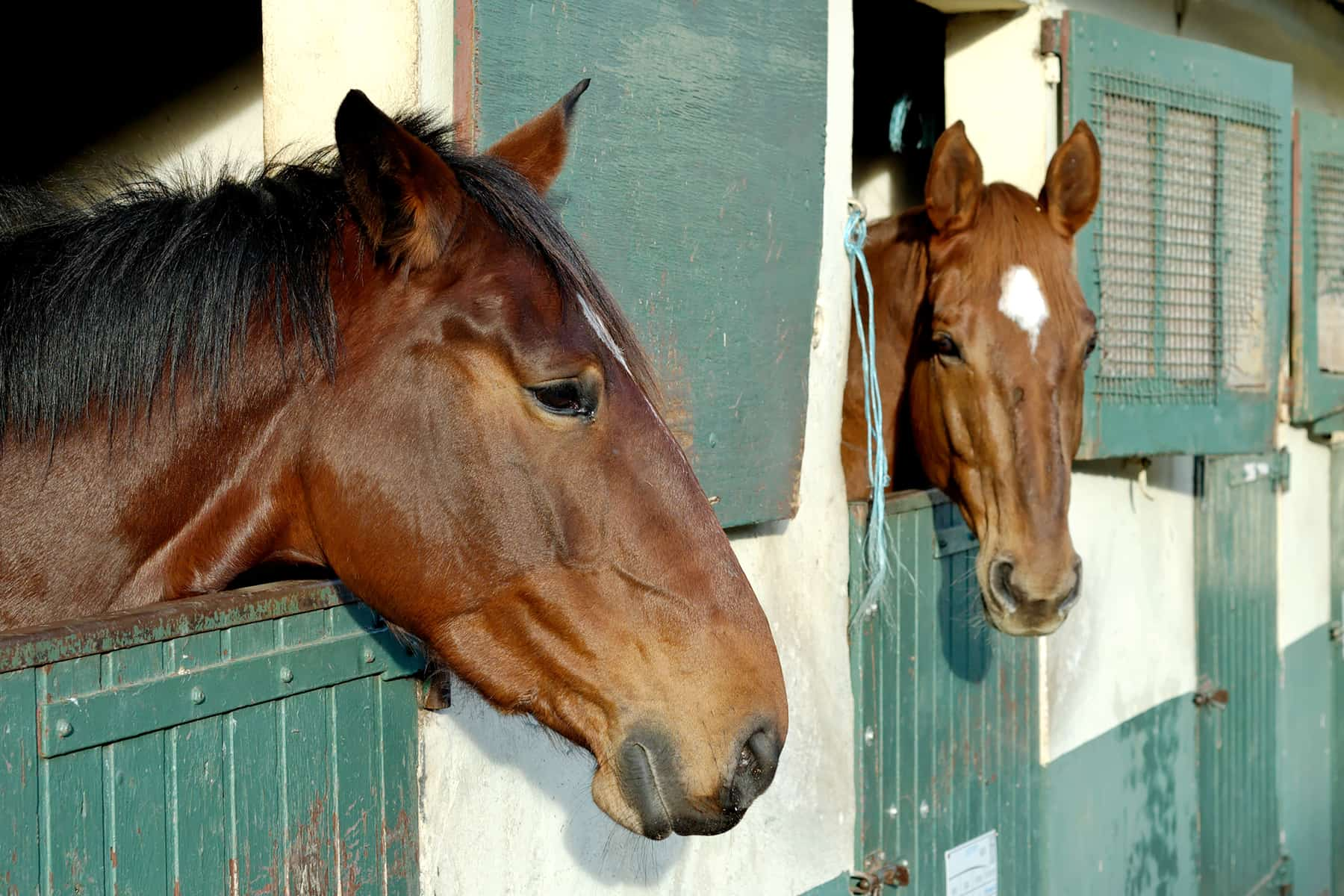 Happy and Unhappy Horses at Home – The Horse