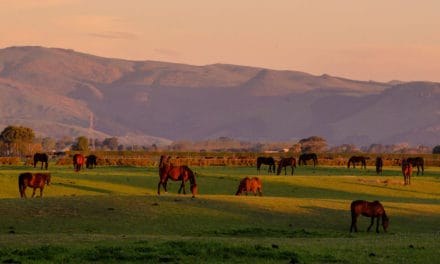 New Zealand Issues Horse and Donkey Welfare Code