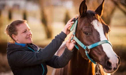 Scientists Test Quarter Horse Personality Scoring System
