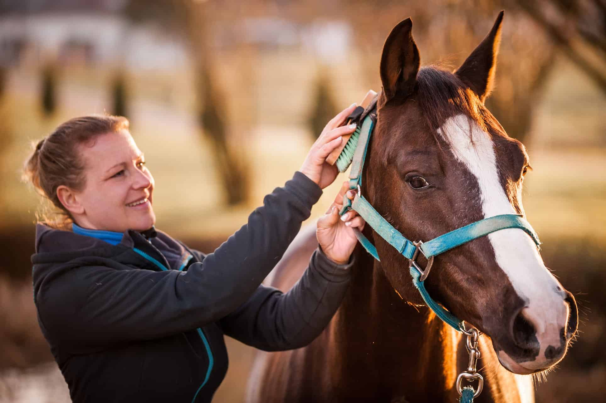 Image result for Purchasing a Horse  istock