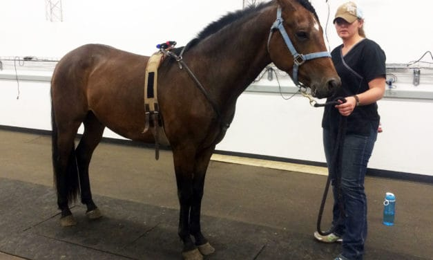Researchers Validate Portable Device for Measuring Equine Postural Stability