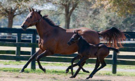 Equine Innovators: Horse Breeds and Genetic Variation