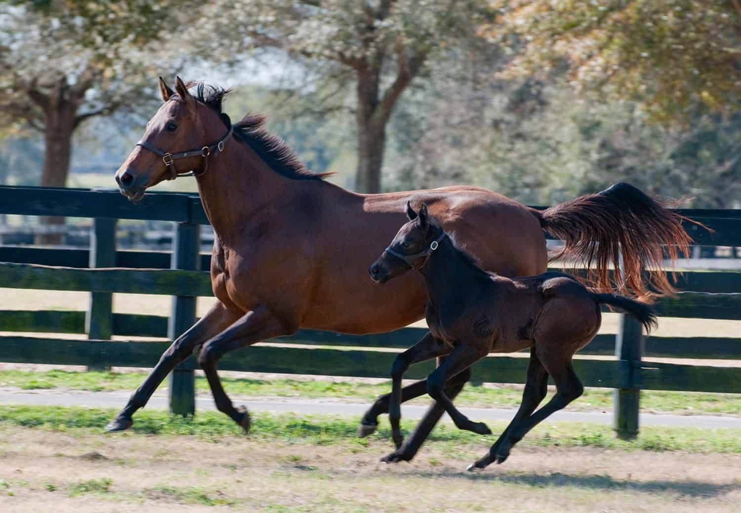 Young Foal Exercise The Horse