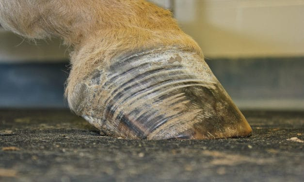 Hoof Care for EMS Horses