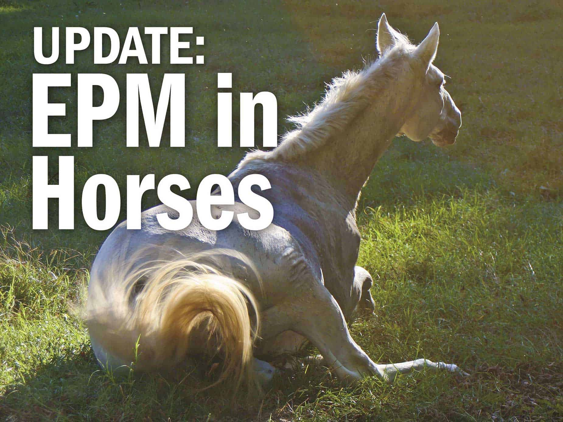 Better Yet Why Not Leave Horsies At >> Update Epm In Horses The Horse