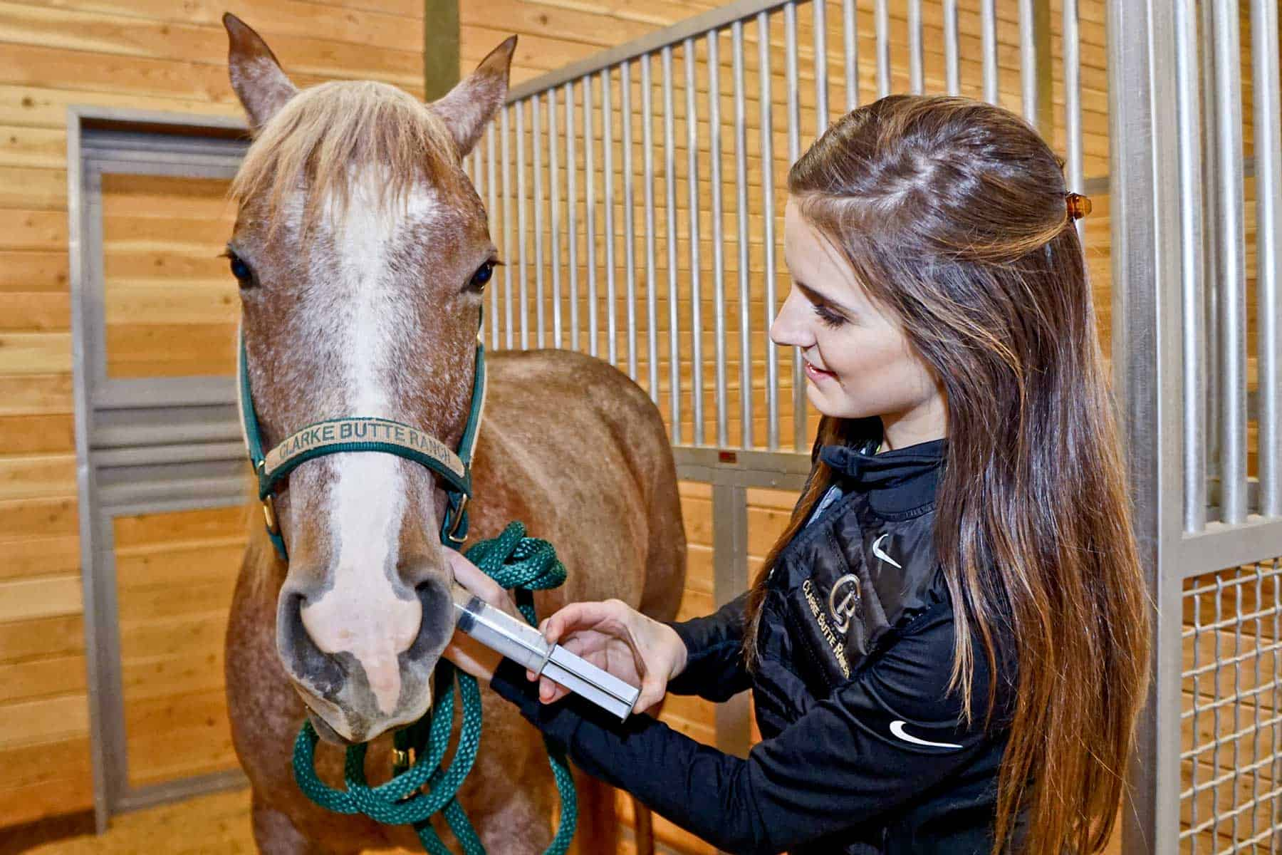 Tips for Getting Horses to Eat Medications