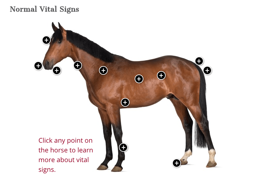 Equine Vital Signs Interactive