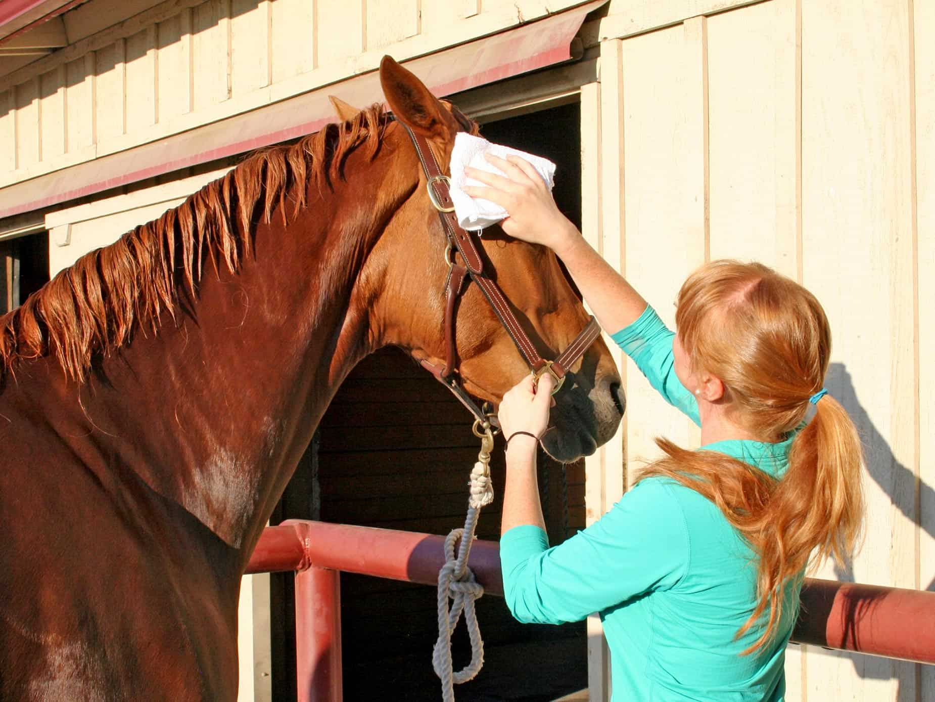 Equine Detailing: Elevate Your Grooming Routine – The Horse