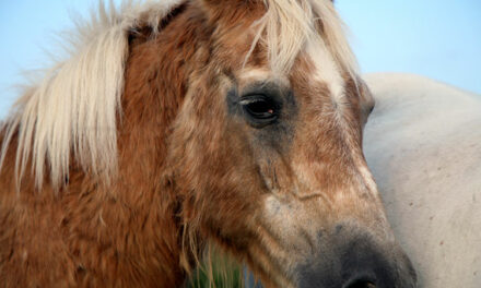 Pituitary Glands in Horses: One Size Fits All