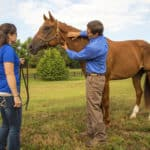 Low-Stress Horse Husbandry