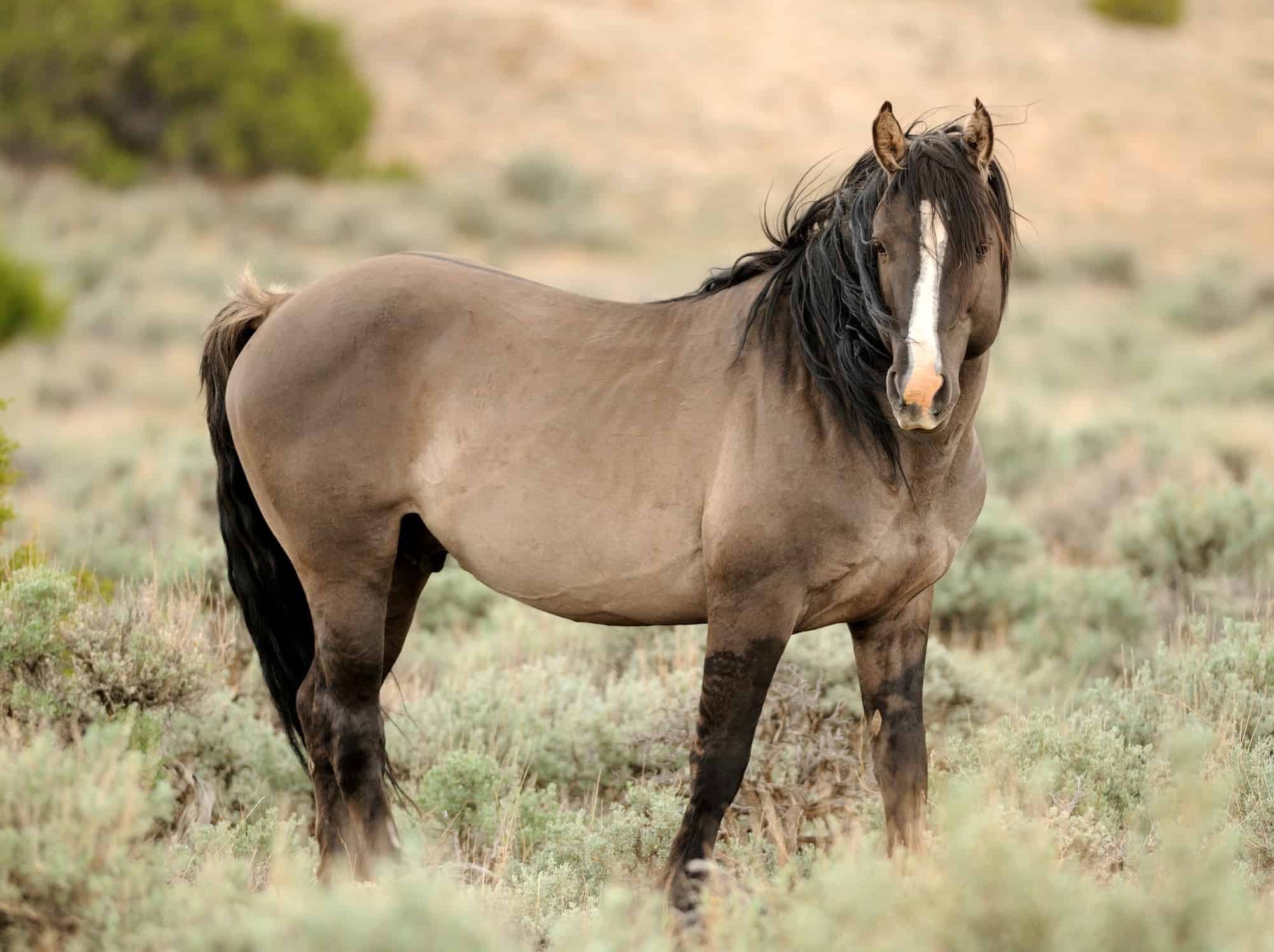 Blm Ponders Cash Incentive For Mustang Adopters The Horse