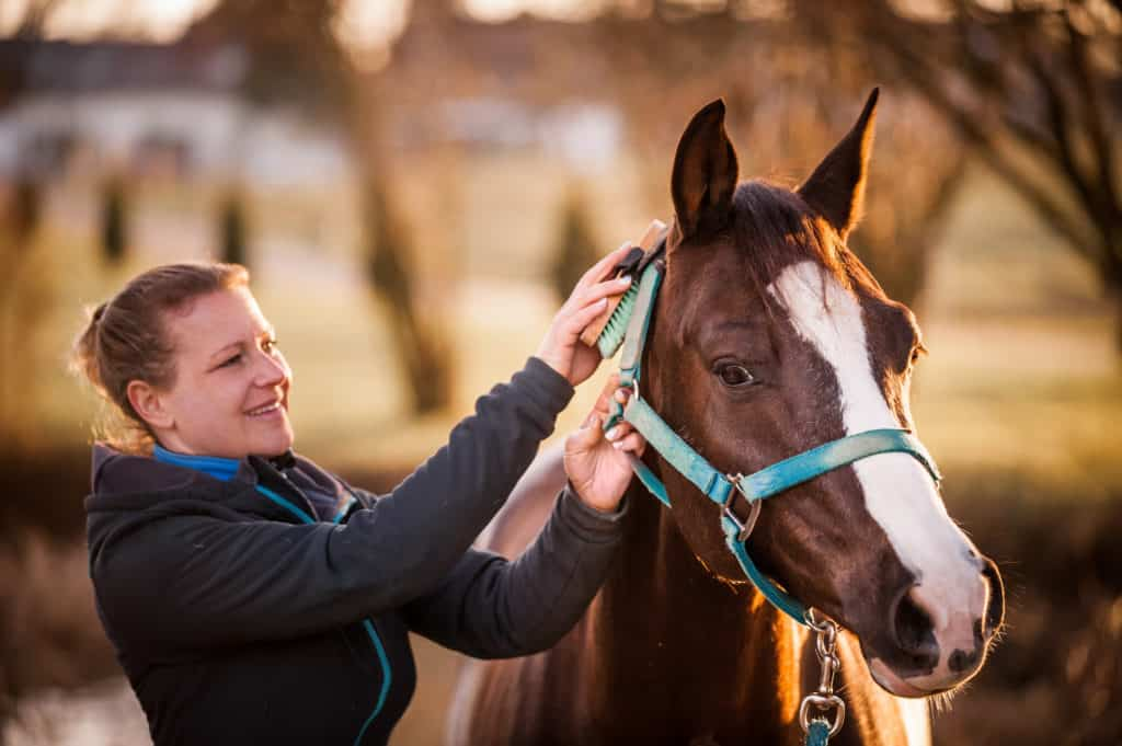 Is It Lyme Disease? – The Horse