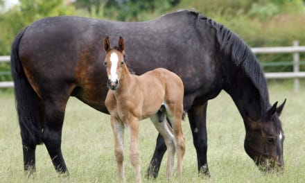Small-Scale Success: Responsible Boutique Horse Breeders