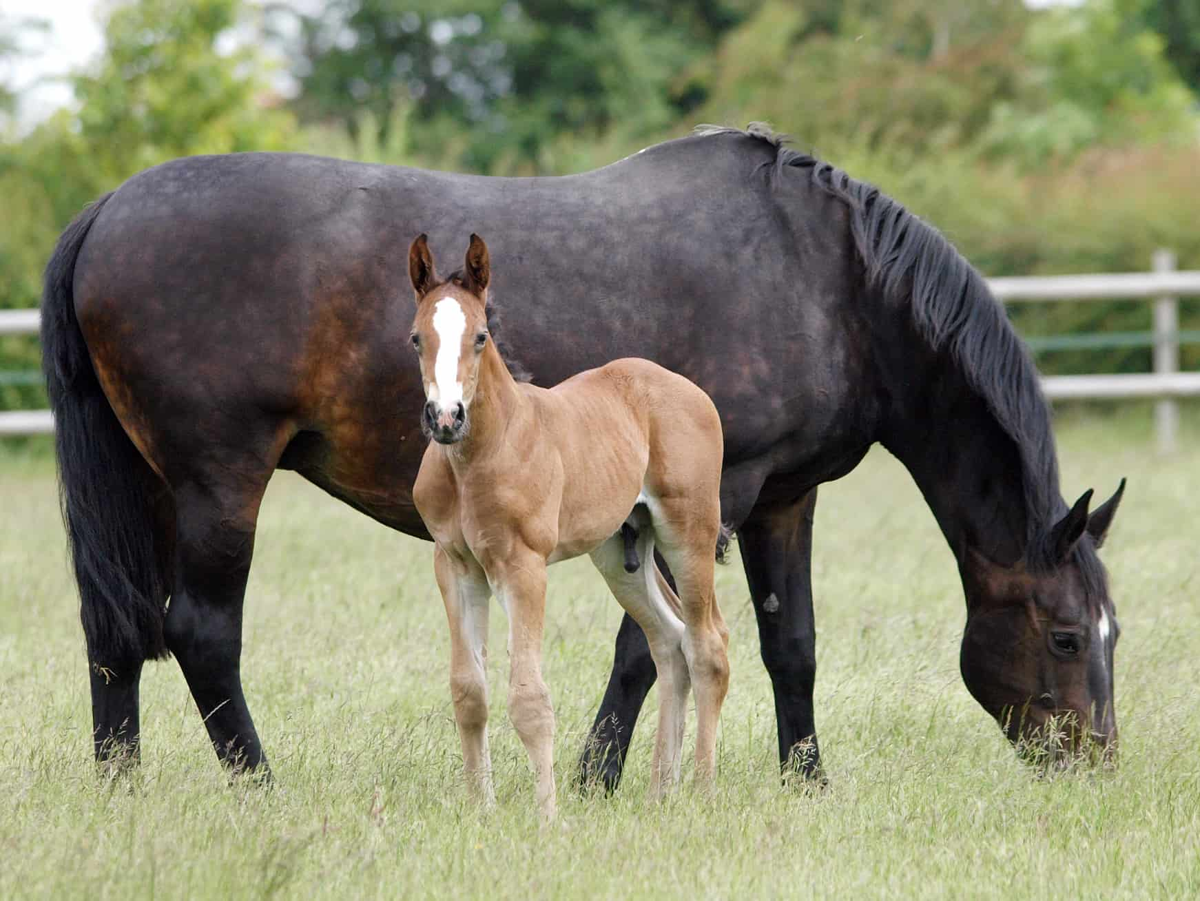 Small-Scale Success: Responsible Boutique Horse Breeders – The Horse