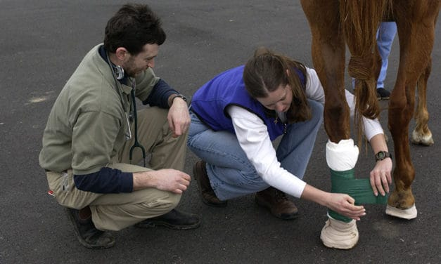 Equine First-Aid Basics, Part 2