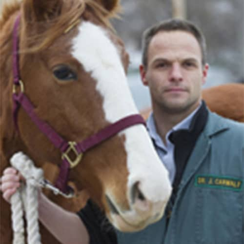 95fcc2b0eea Dr. Carmalt is a professor of equine surgery at the University of  Saskatchewan's Western College of Veterinary Medicine (WCVM) and a  veterinary specialist ...