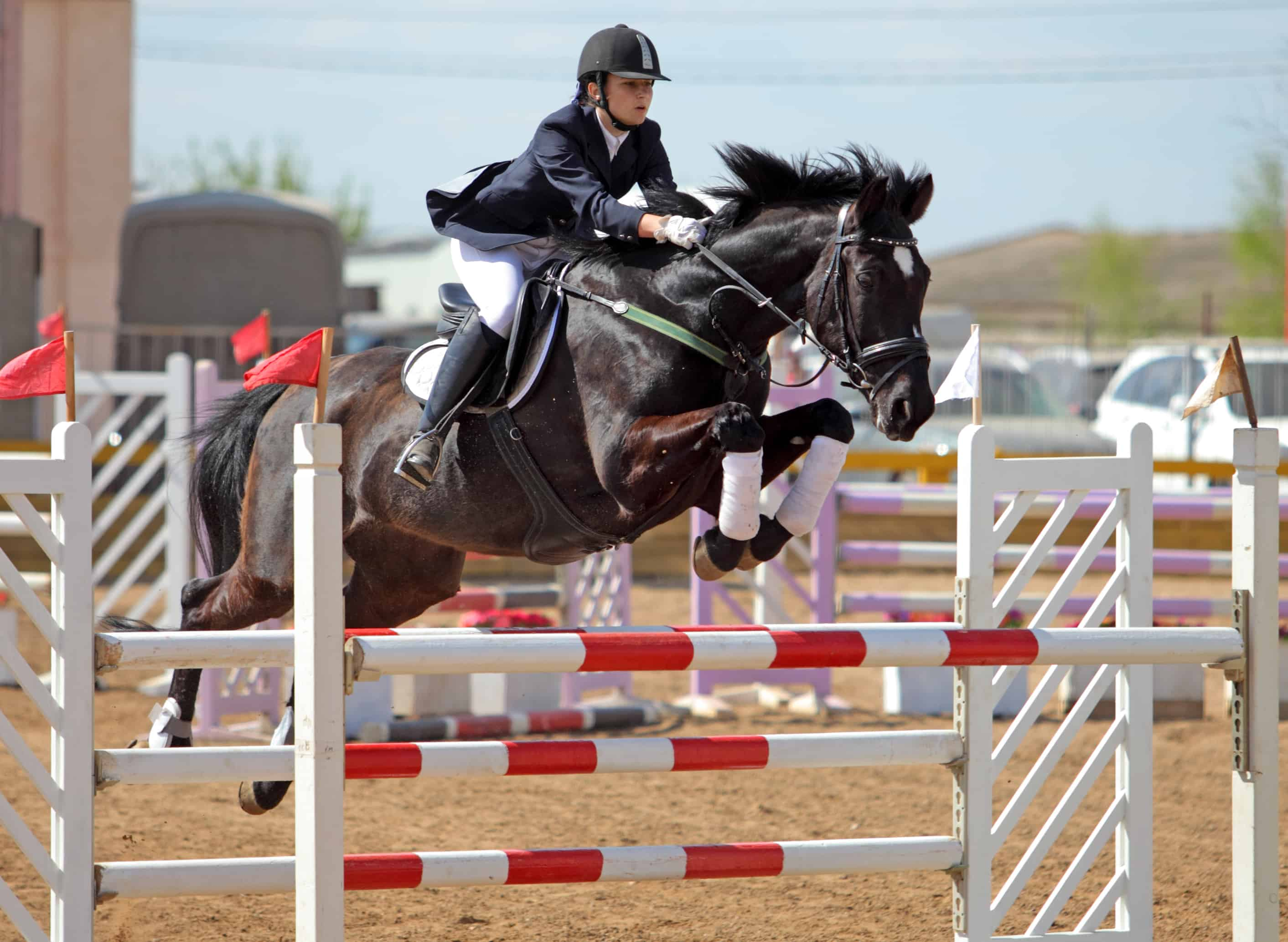 Scientists Monitor Jumpers Heart Rates During Competition The Horse
