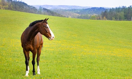 What Do Lyme Disease Titers Mean in Horses?