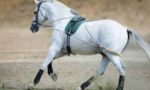 Training Aids: How Their Fit Could Help or Hinder Longeing Horses