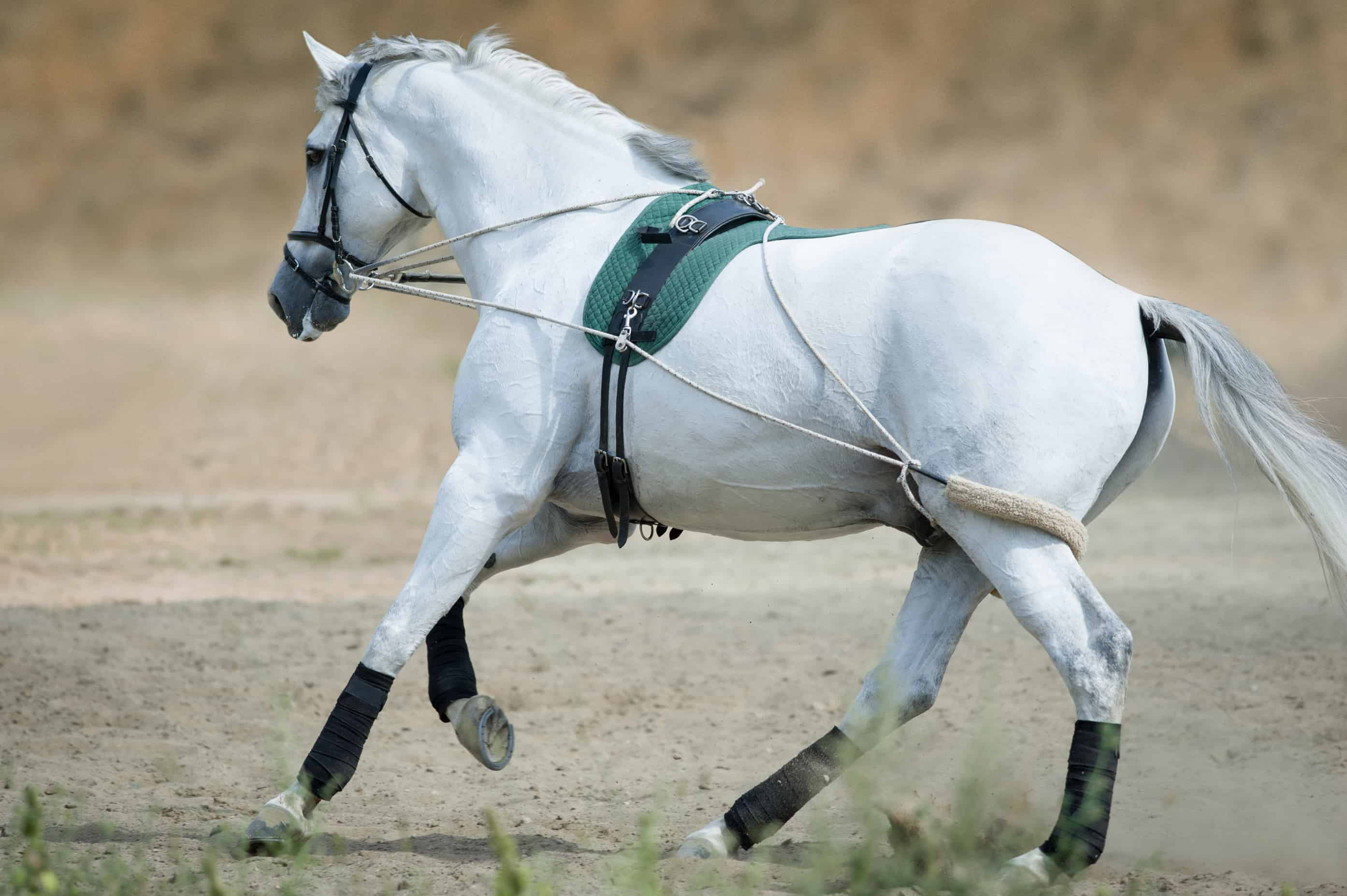 Image result for Horse Training
