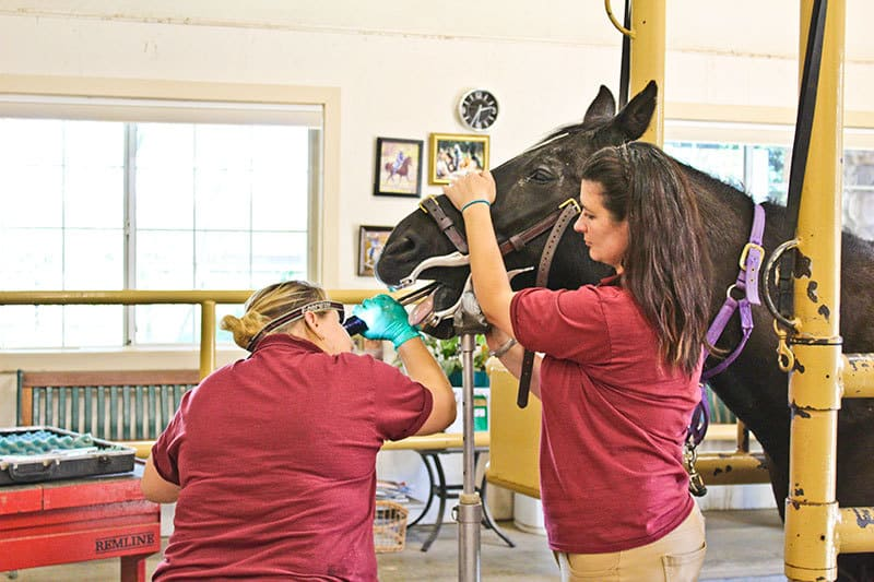 A Day in the Life of an Equine Veterinary Technician