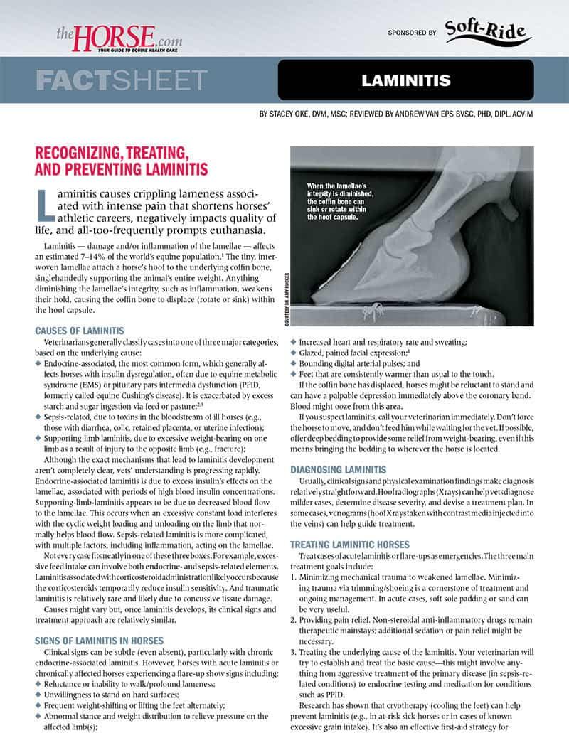 Fact Sheet: Laminitis