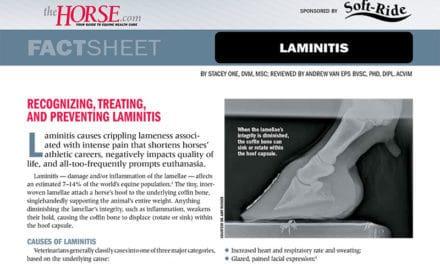 Fact Sheet: Laminitis in Horses