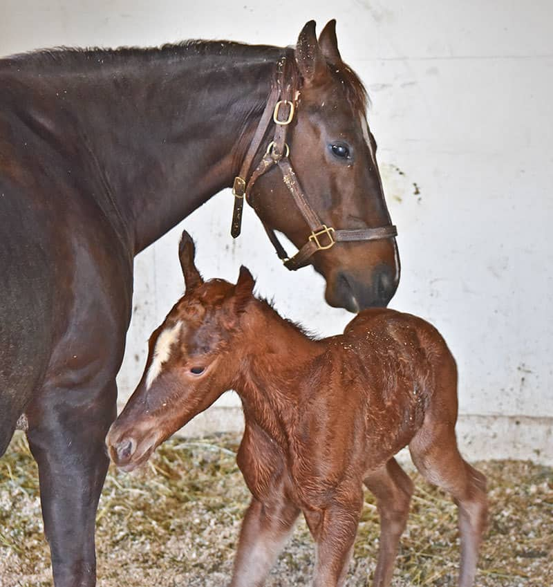 A Day in the Life of an Equine Veterinary Technician - foal watch