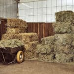 Is Rained-On Hay Any Good for Horses?