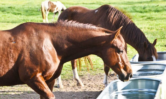 What's in Your Horse's Water?