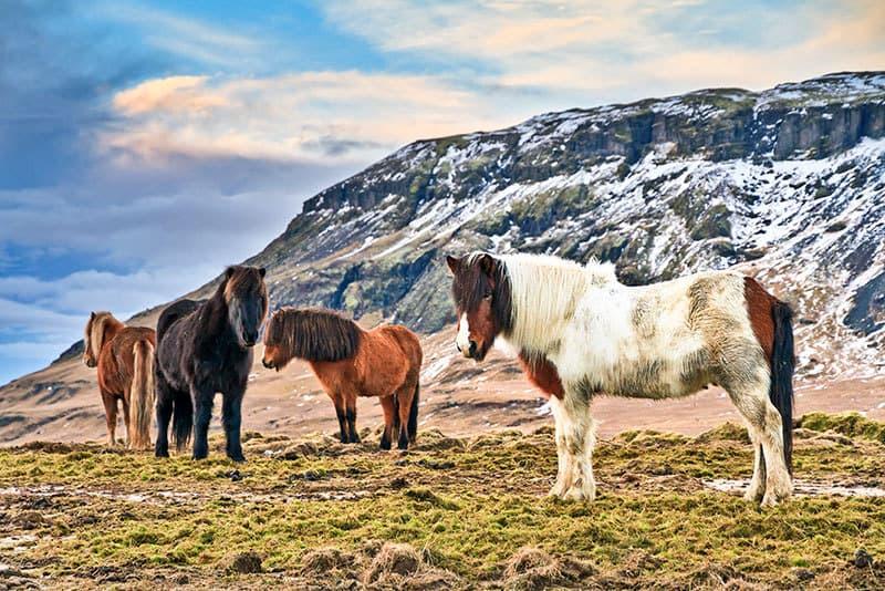 Legendary Equine Disease Outbreaks