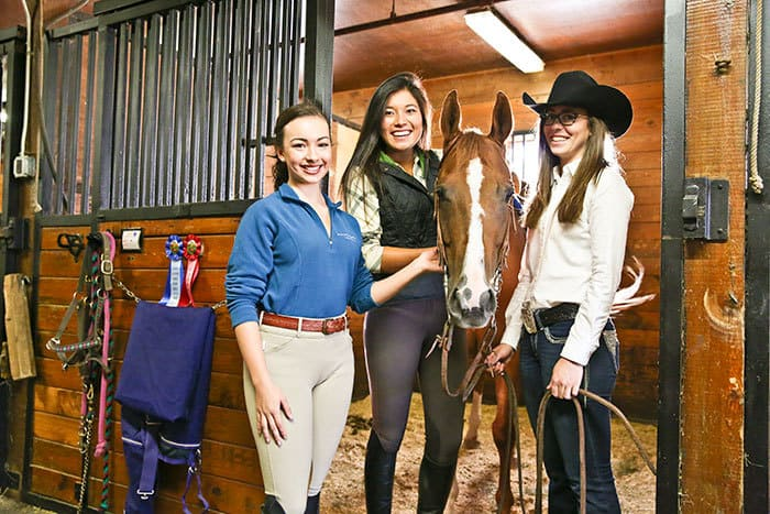 Lesson Horse Health