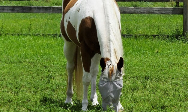 Sun Protection for Horses