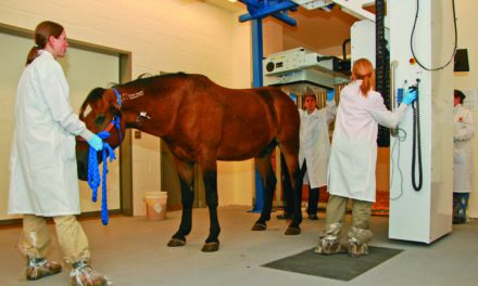 Scintigraphy's Diagnostic Reliability for Horse Hoof Pain Limited