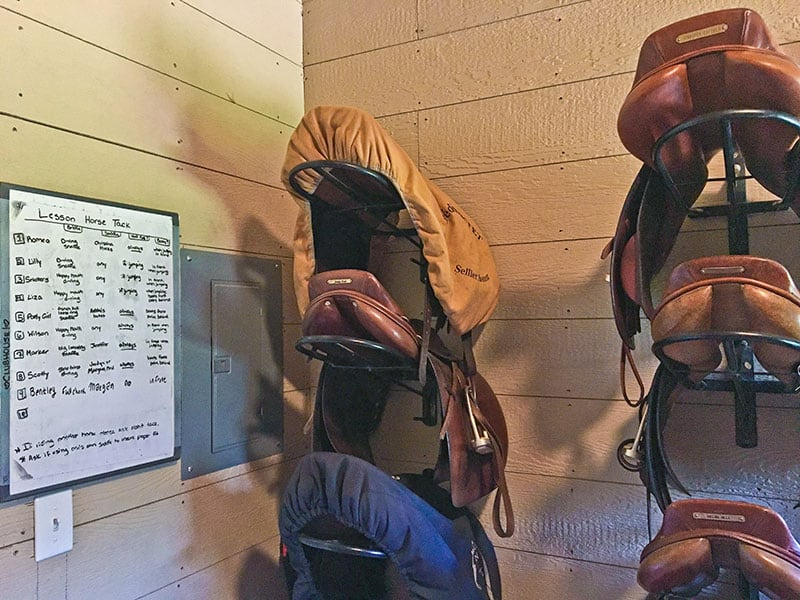 The Lesson Horse Lifestyle